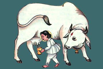 Things To Know Hinduism The Venerable Cow